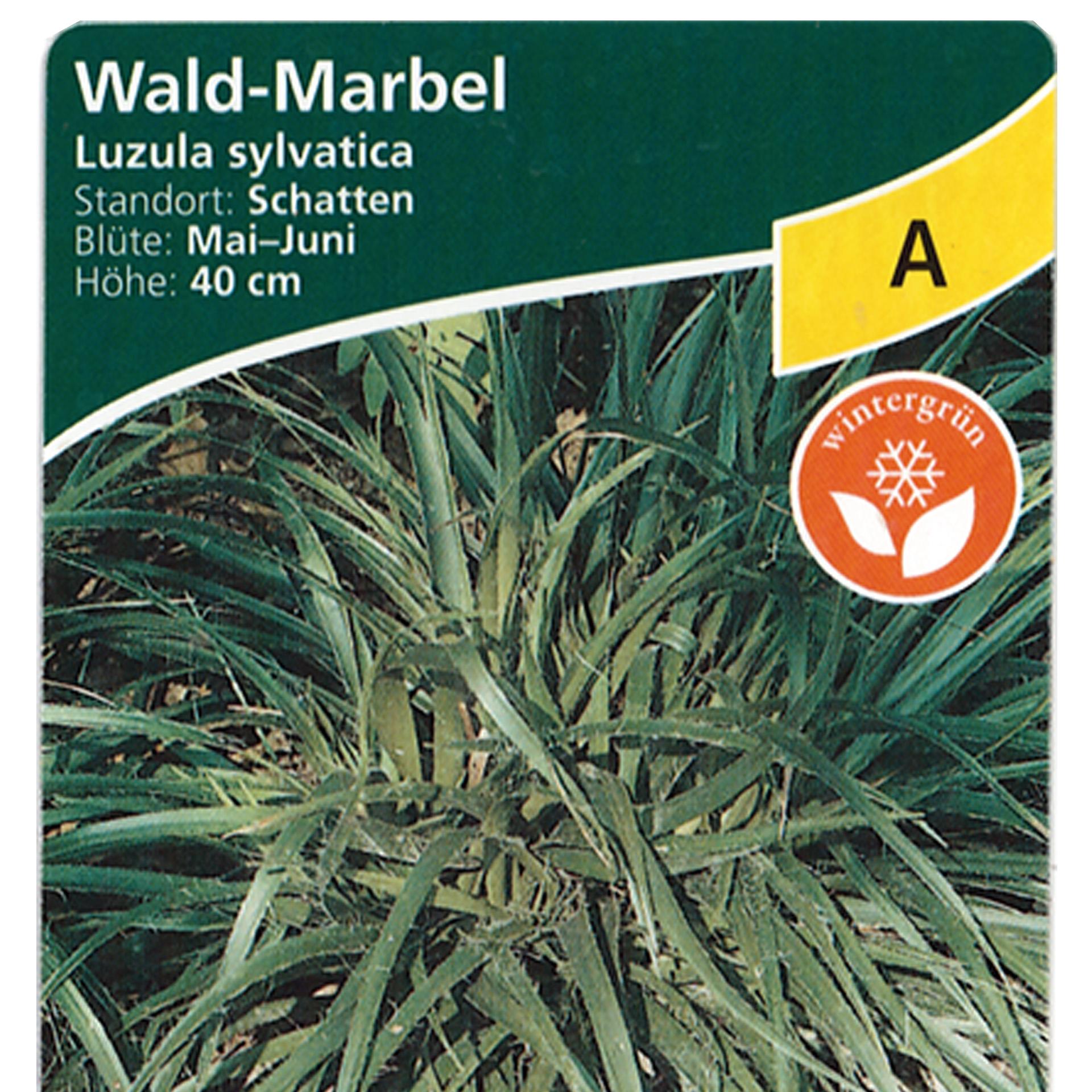 Wald-Marbel