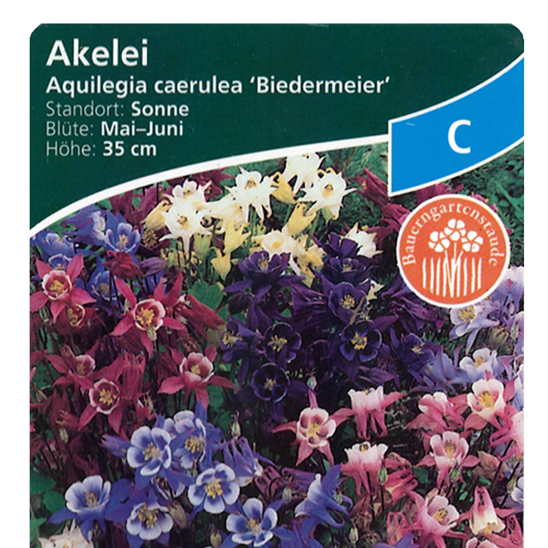 Akelei  - Aquilegia caerulea 'Biedermeier', 9cm Topf