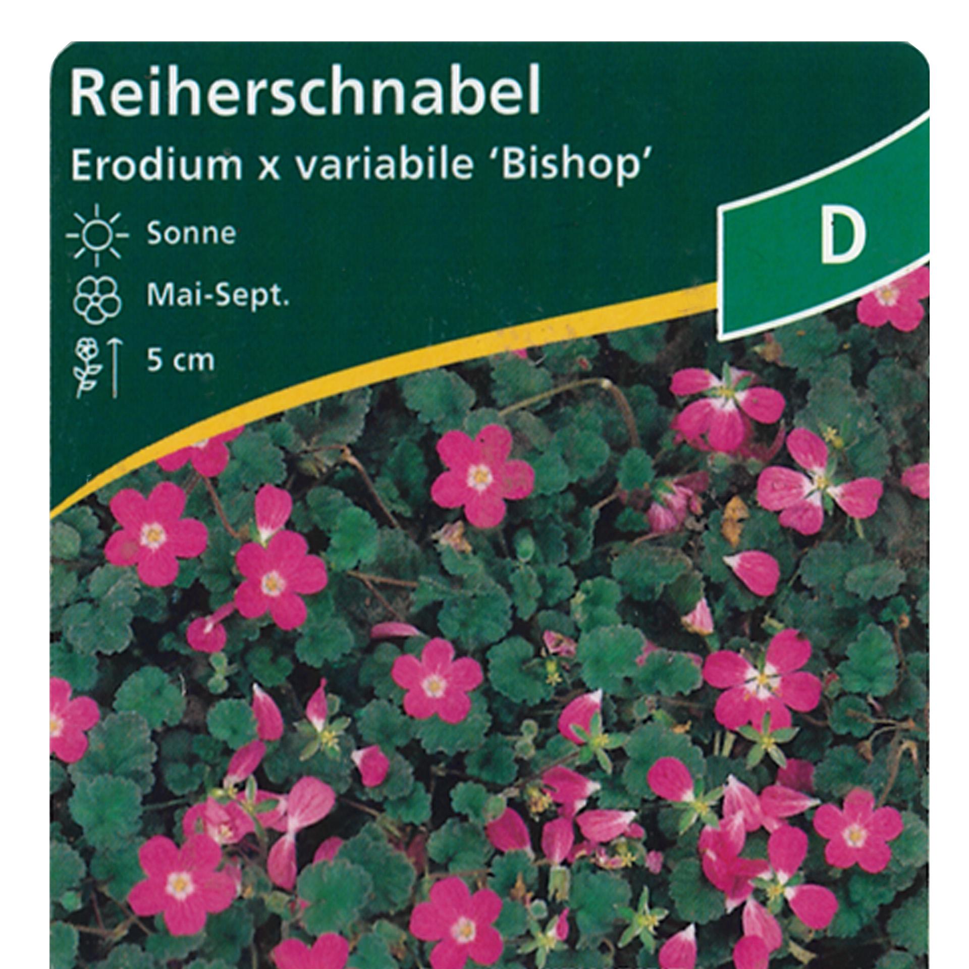 Reiherschnabel - Erodium variabile 'Bishop', 9cm Topf
