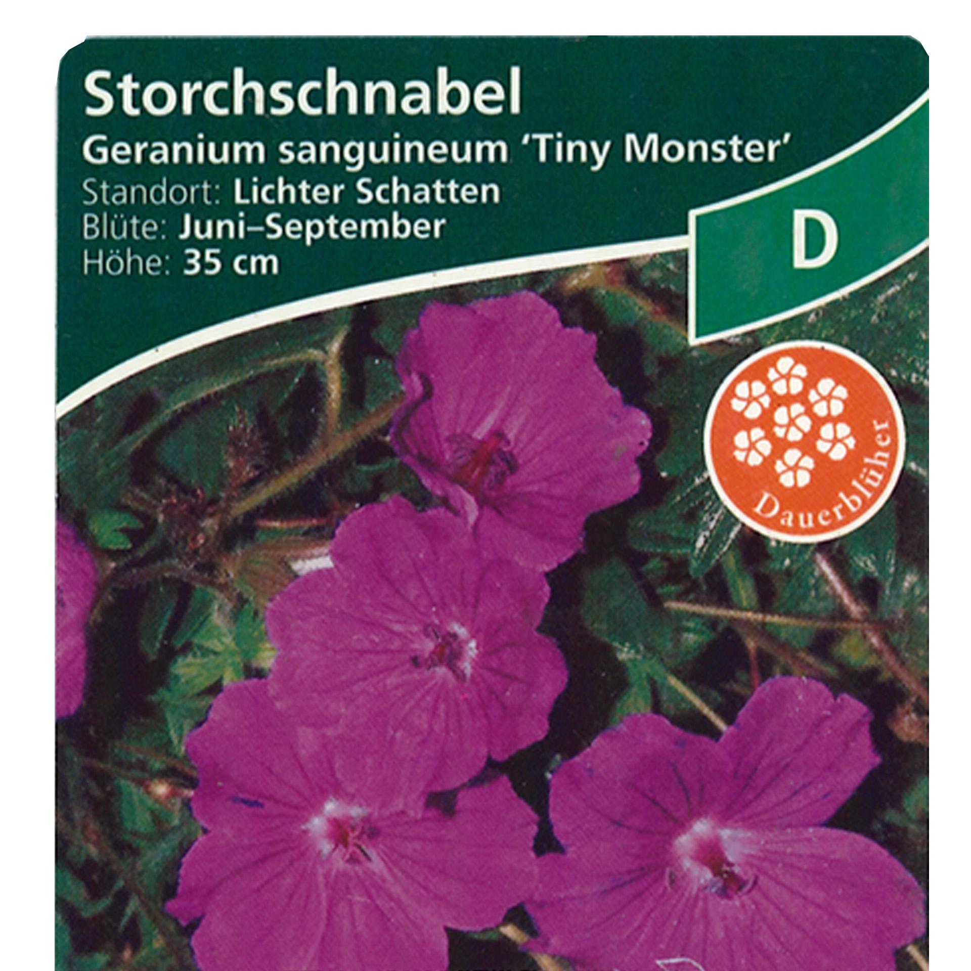 Blutroter Storchschnabel - Geranium sanguineum 'Tiny Monster', 9cm Topf