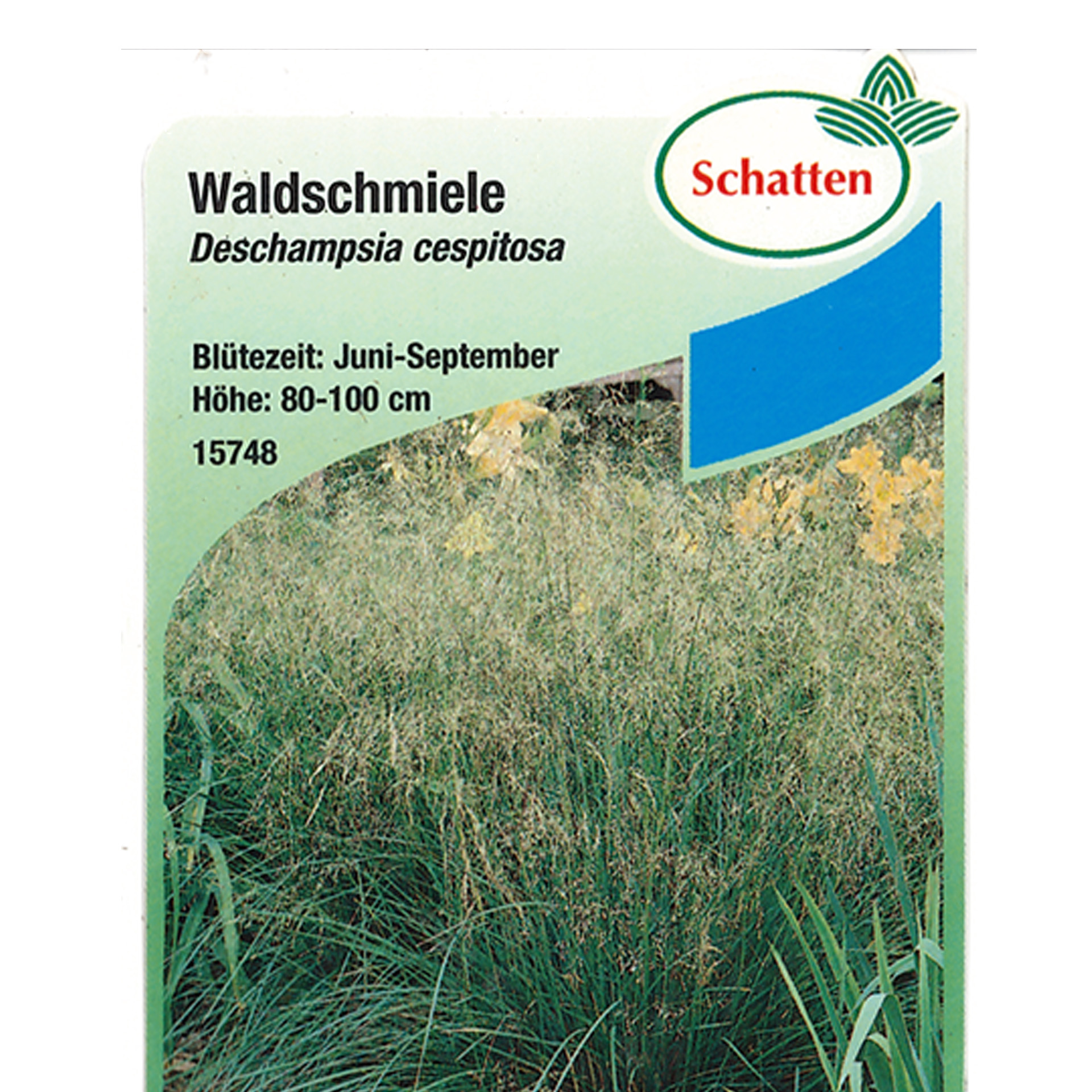 Waldschmiele - Deschampdia cespitosa, 9cm Topf