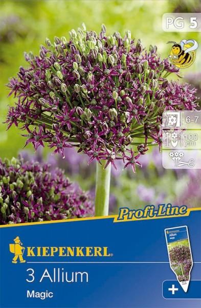 Allium Magic Blumenzwiebel