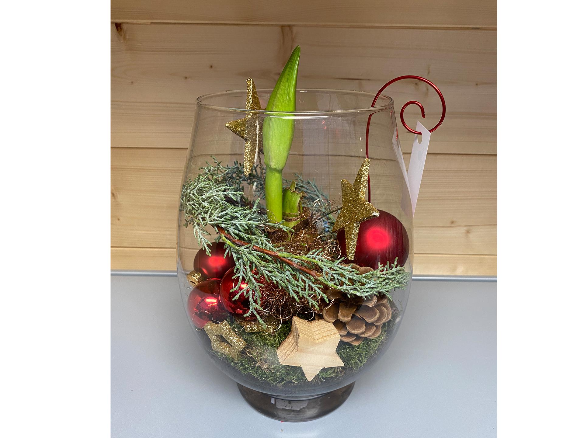 Glas bepflanzt Amaryllis