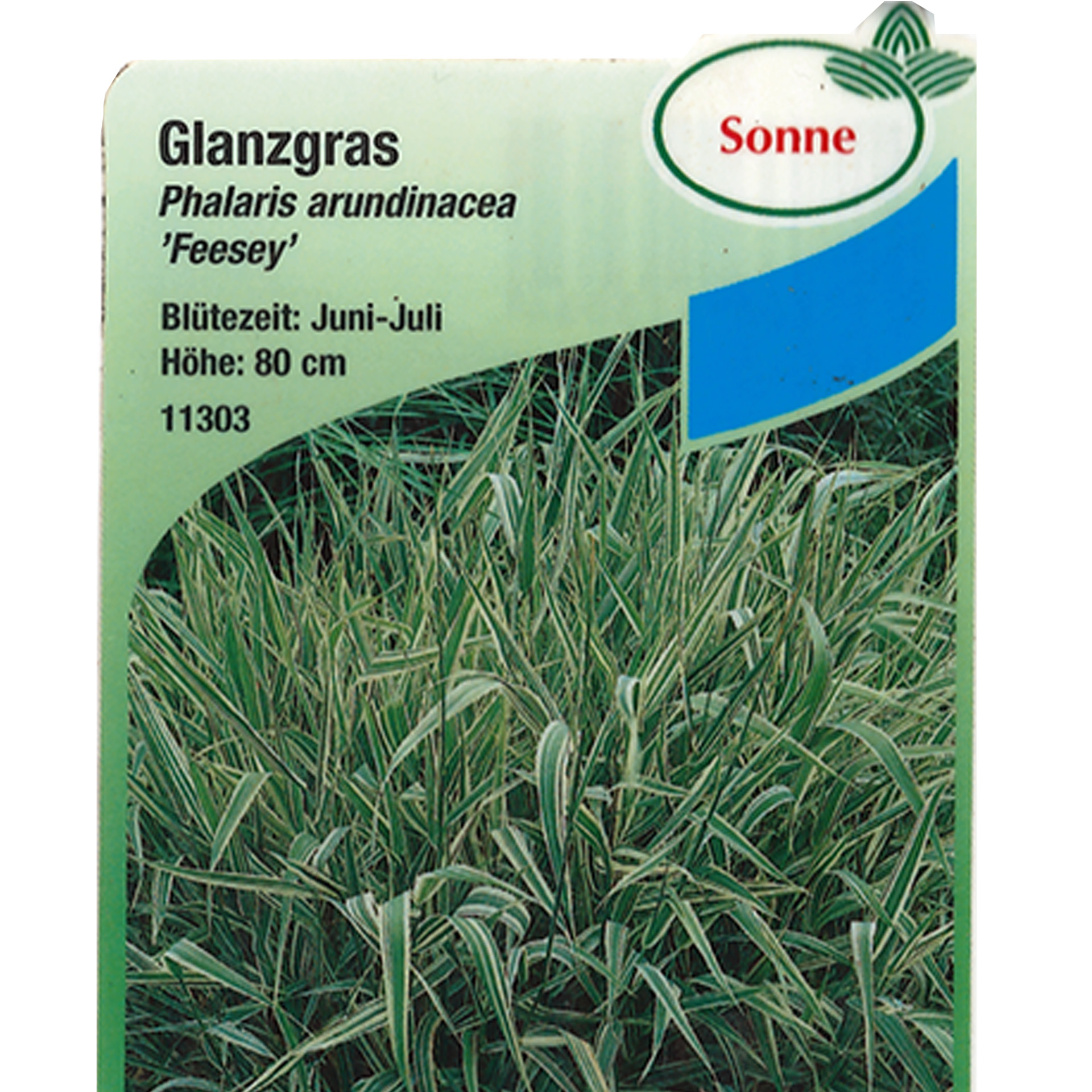 Rohr-Glanzgras - Phalaris arundinacea 'Feesey', 9cm Topf