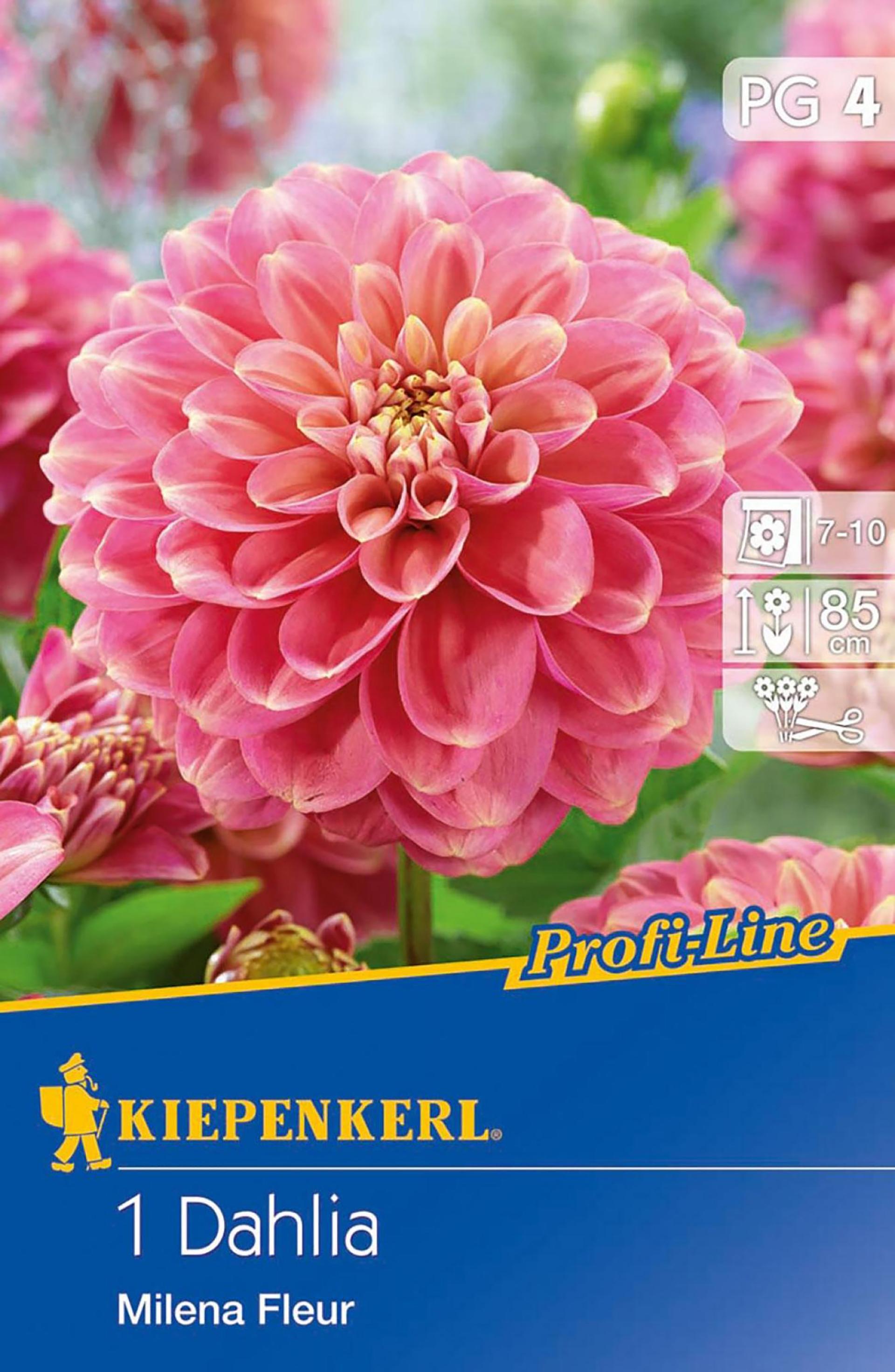 Dahlie Milena Fleur PG-4