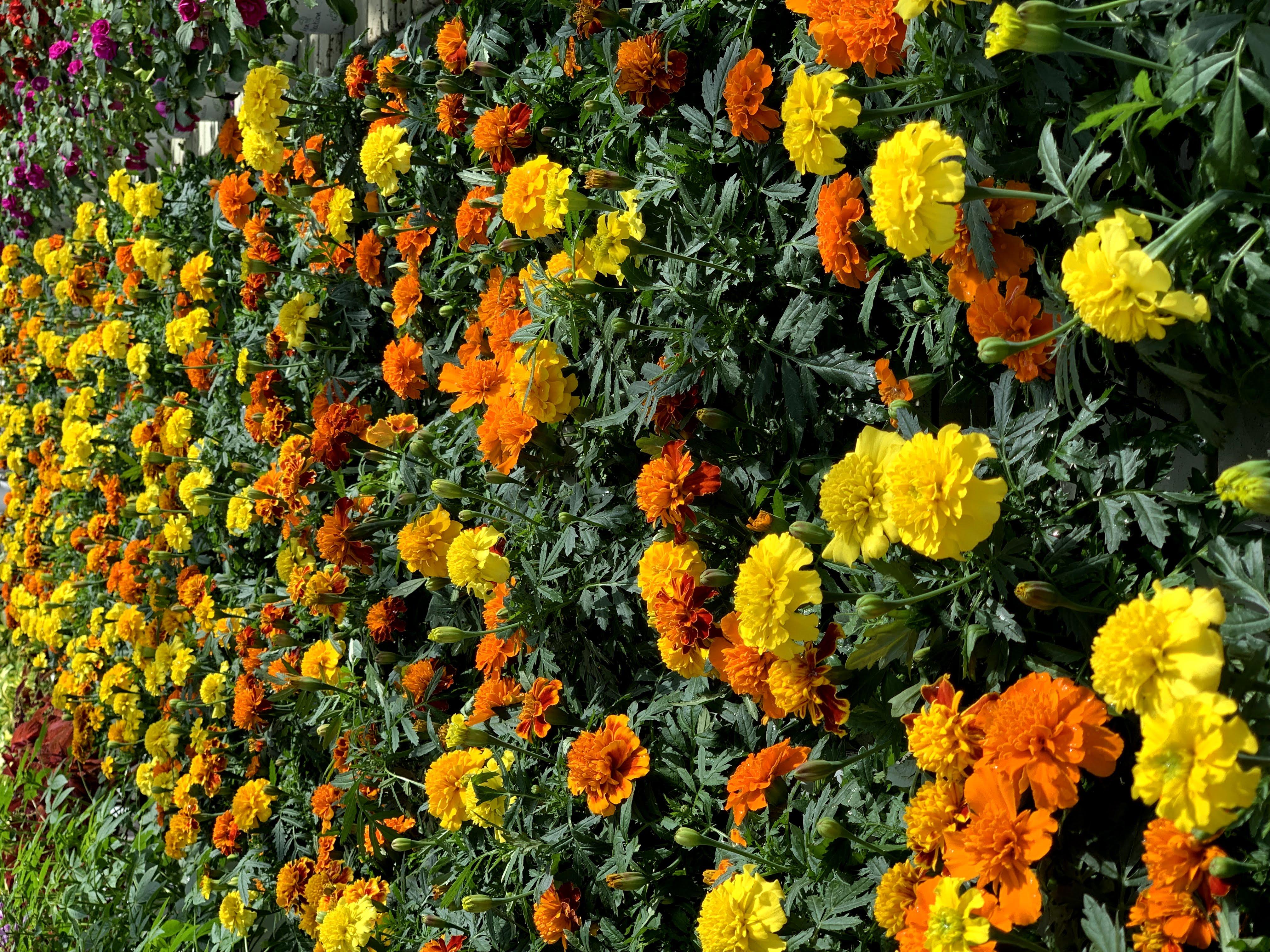 Stehende Sommerblumen