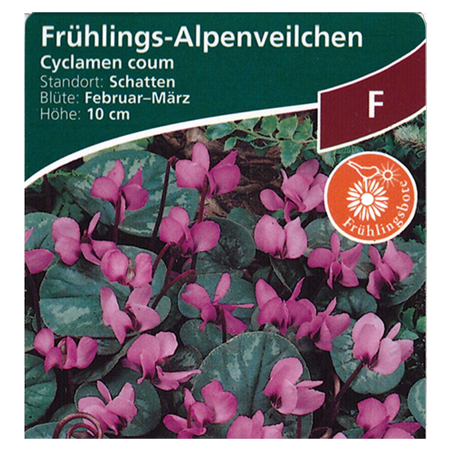 Frühlings-Alpenveilchen - Cyclamen Coum rosa, 9cm Topf