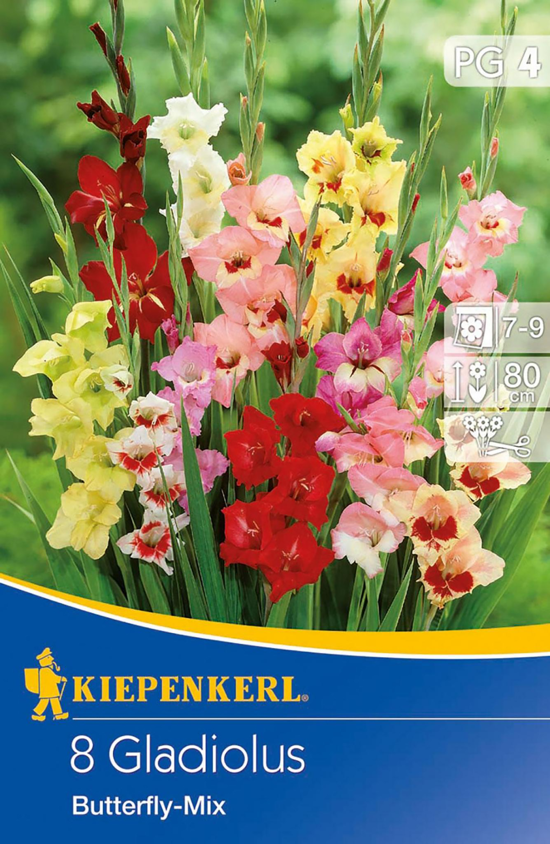 Gladiole Butterfly-Mix PG-4