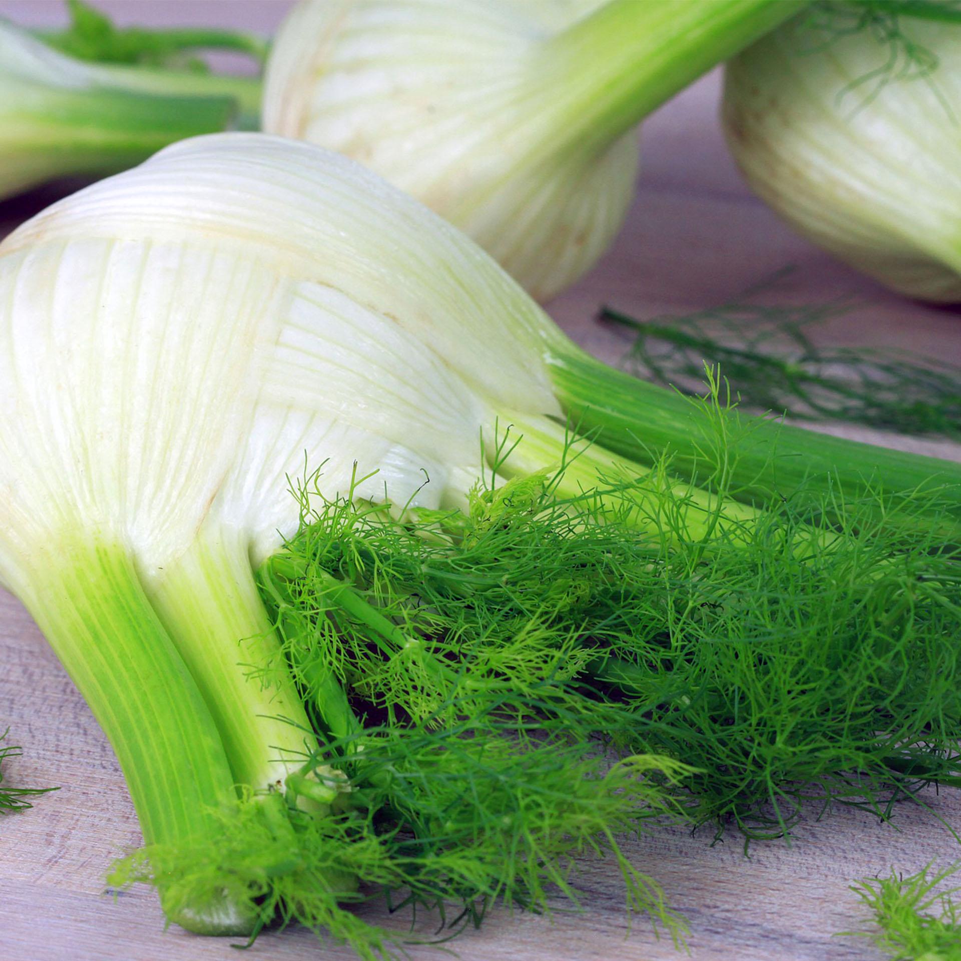Fenchel - Gemüsepflanzen Schale 12er